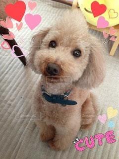 犬の写真・画像素材[71767]