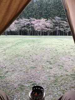 桜キャンプの写真・画像素材[2150576]