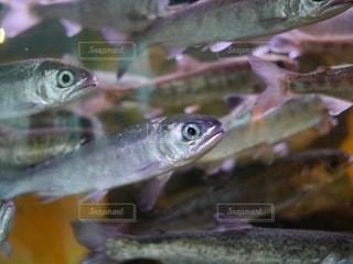 魚 - No.294376