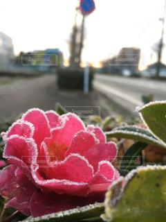 花の写真・画像素材[587028]
