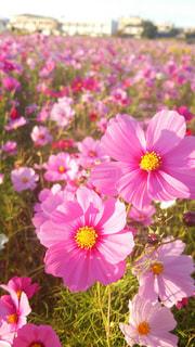 花の写真・画像素材[587031]