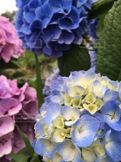 花の写真・画像素材[587061]