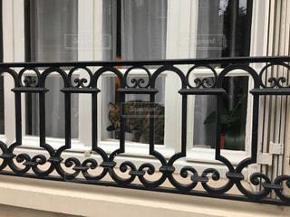 窓辺のネコの写真・画像素材[1905263]