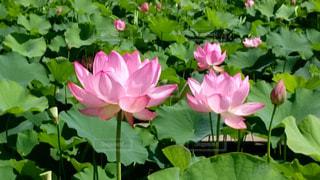花のクローズアップの写真・画像素材[2109282]