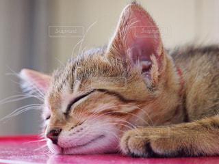 猫の写真・画像素材[405098]