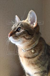 猫の写真・画像素材[405103]