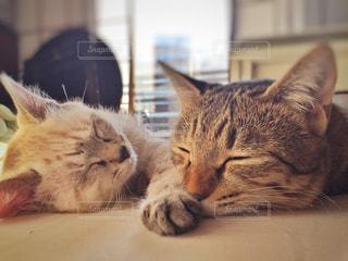 猫の写真・画像素材[405106]