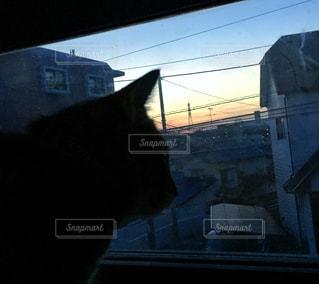 猫の写真・画像素材[405134]