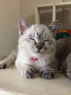 猫の写真・画像素材[405140]