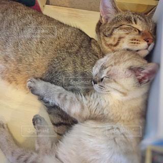 猫の写真・画像素材[405141]