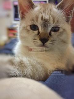猫の写真・画像素材[405142]