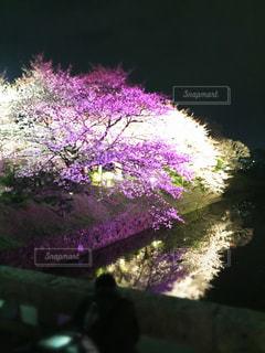 夜景の写真・画像素材[405734]