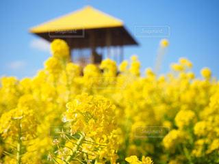 愛知牧場の写真・画像素材[2002846]