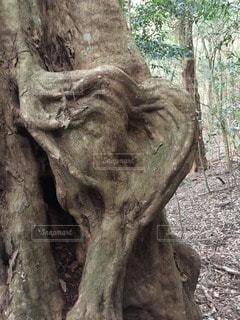 森林の写真・画像素材[67549]
