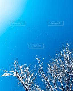 雪の中でサンゴの写真・画像素材[1914265]