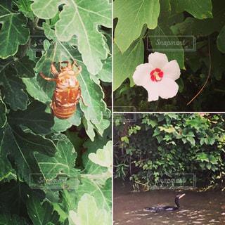夏の初めの生き物の写真・画像素材[2190413]