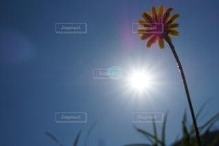 お花畑の写真・画像素材[68646]