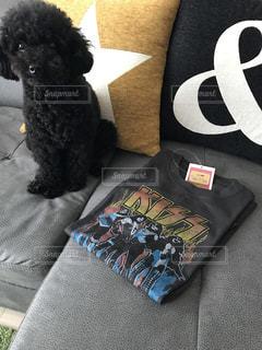 ロックTシャツと愛犬の写真・画像素材[2043624]