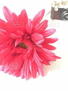花と小物の写真・画像素材[2055828]
