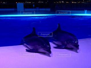 夜の水族館の写真・画像素材[2072068]