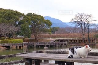 猫のいる風景の写真・画像素材[2854269]