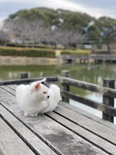 猫のいる風景の写真・画像素材[2854272]