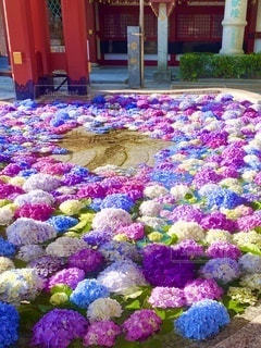 太宰府天満宮の花手水の写真・画像素材[3338372]