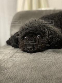 犬のクローズアップの写真・画像素材[3475281]