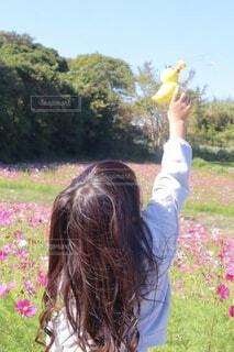 コスモス畑でシャボン玉の写真・画像素材[3812452]