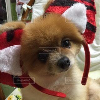 犬の写真・画像素材[68277]
