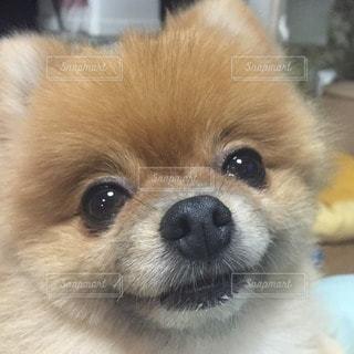 犬の写真・画像素材[68322]