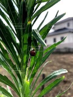緑とてんとう虫の写真・画像素材[3551040]