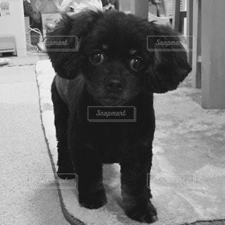 犬の写真・画像素材[76055]