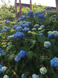 お花畑の写真・画像素材[181455]