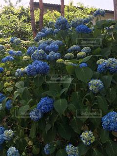 お花畑の写真・画像素材[181456]