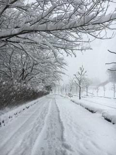 冬の写真・画像素材[181461]