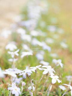 近くの花のアップの写真・画像素材[1898510]