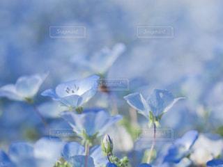 花畑の写真・画像素材[2104778]