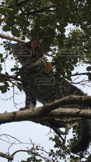枝の上の猫の写真・画像素材[1907364]