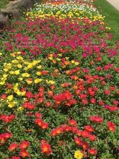 花の写真・画像素材[174993]