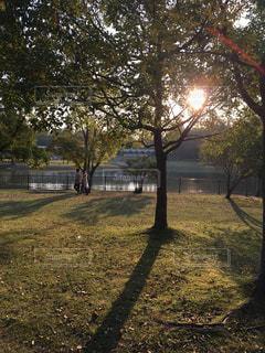 公園の木の写真・画像素材[847390]