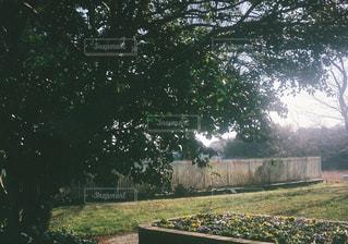 公園にある大きな木の下の写真・画像素材[2107694]
