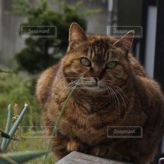 猫 - No.67928
