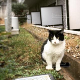 猫 - No.67934