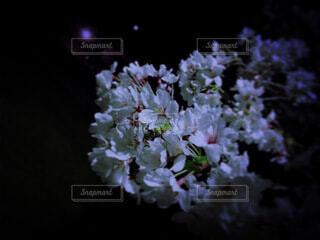 花のクローズアップの写真・画像素材[3990886]
