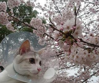 猫の写真・画像素材[71373]