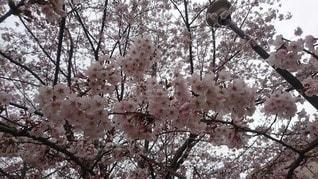 春 - No.71403