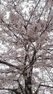 春 - No.71404