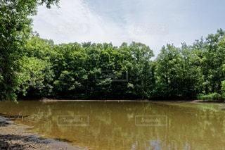 森林 - No.115590