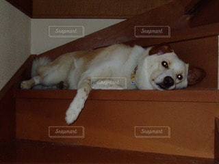 犬の写真・画像素材[115718]